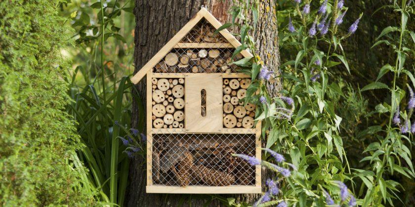 How to bring more wildlife into your garden