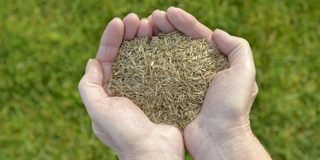 Sowing grass seed in September