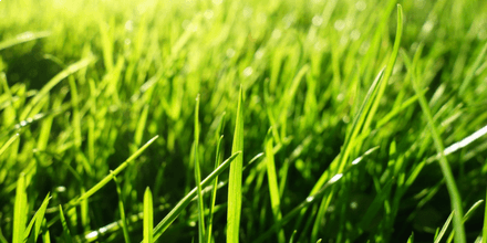 Become a superstar at home with our newest grass seed
