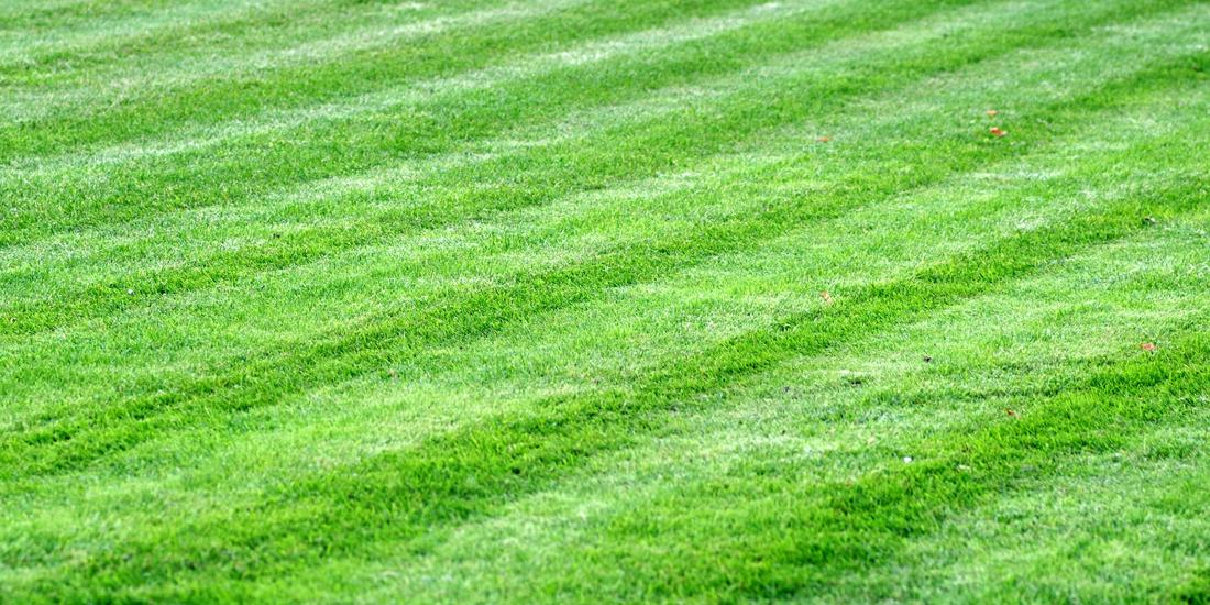 Grass Seed Guide