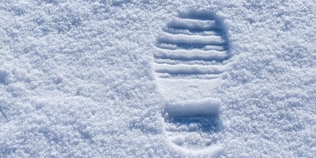 What walking on a snowy lawn does to your grass