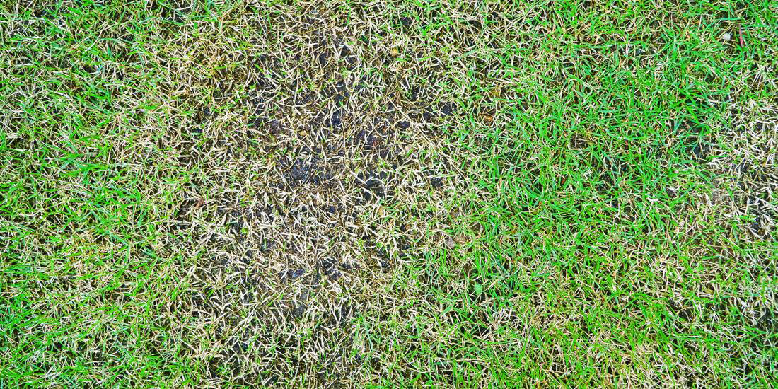 How to repair thinning grass, patches and holes in your lawn