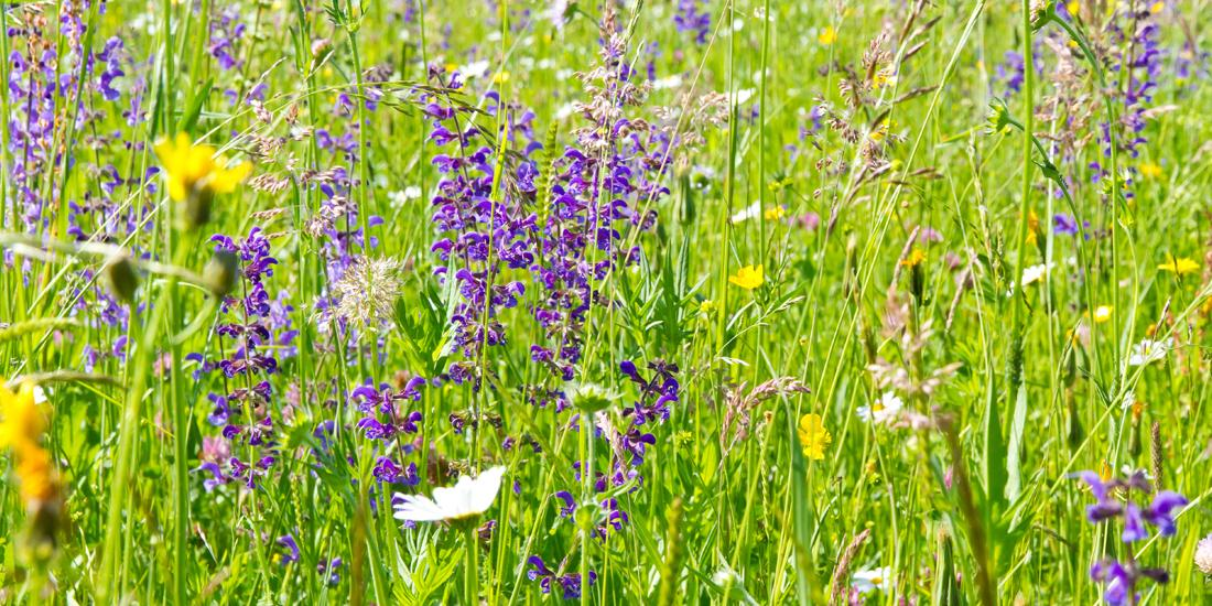 When should I sow wildflowers?