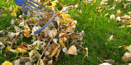 How to keep your lawn healthy in autumn and winter
