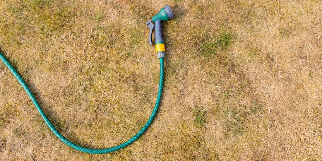 The Post Drought Lawn Repair Guide