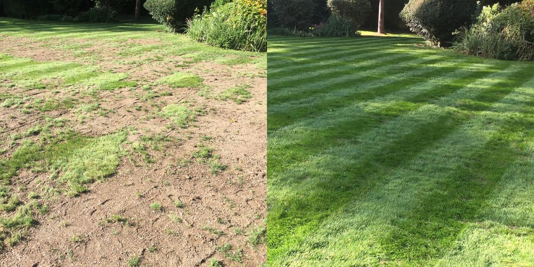 Lawn transformations from The Grass People