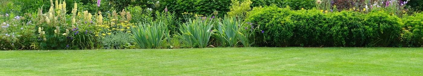 Sowing Lawn Seed – Best Practice Tips