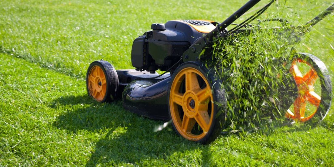 How often and how short should we cut grass?