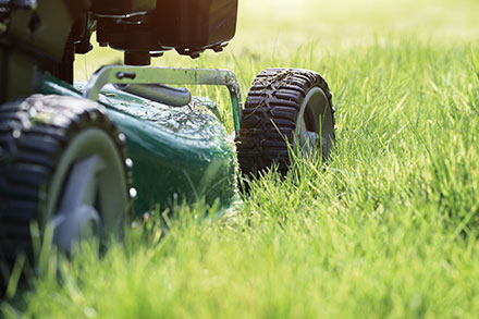 How Short and How Often Should We Cut Grass?