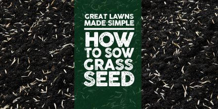 How to Sow Seed Video