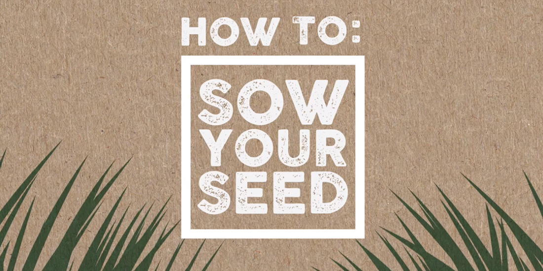 How to: Sow your seed
