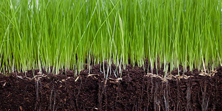 Aeration - How to Aerate Your Lawn