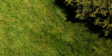 Has your lawn lost its mojo?