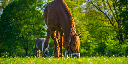 Horse Paddock Management​