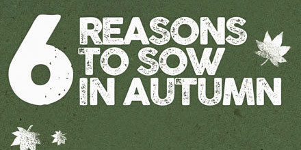 Six Reasons to Sow in Autumn