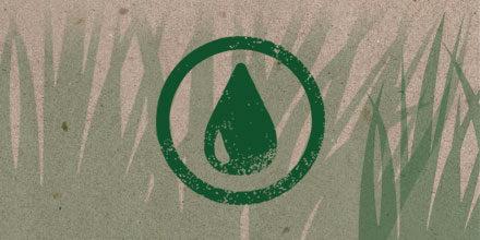 Watering New Seed Video