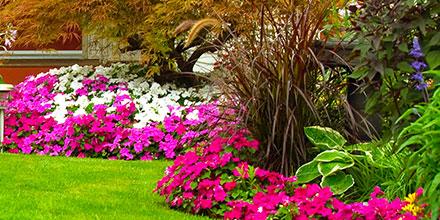 Wildflower Autumn Seeding Guide