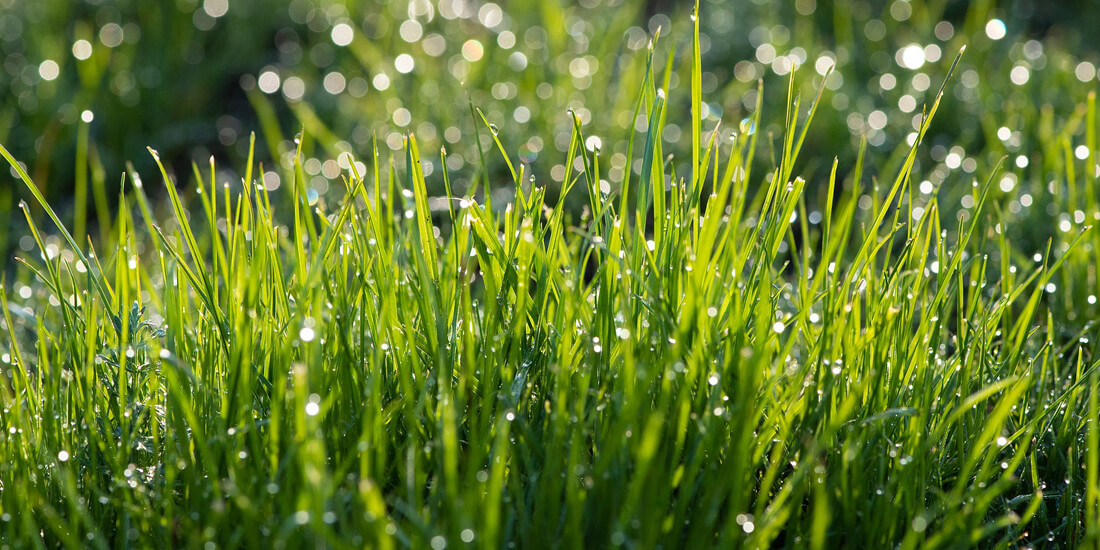 How to keep your lawn healthy