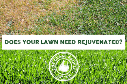 How Do I Overseed My Lawn?
