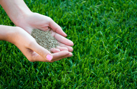 Which is the best grass seed?