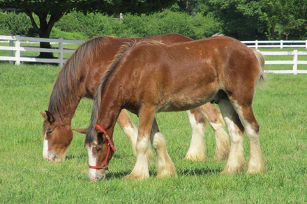 How To Maintain Your Horse Paddock