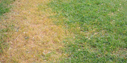 How to Repair your Lawn – tips for patches and holes