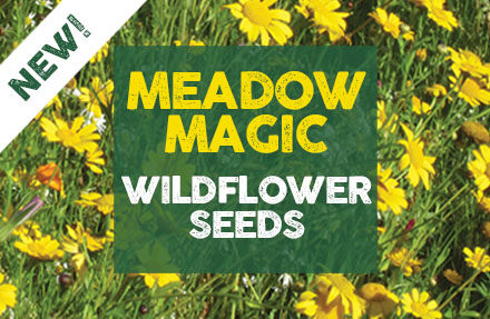 Luxury Wildflower Mixture 'Meadow Magic' - Now Available!