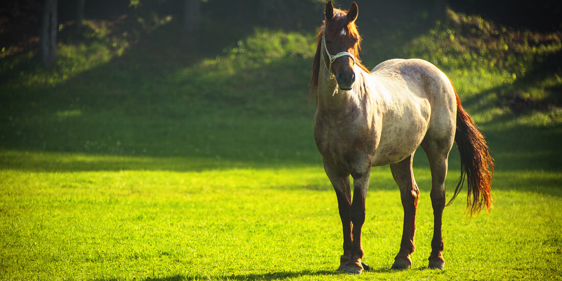 Equine grass seed – to repair or reseed?