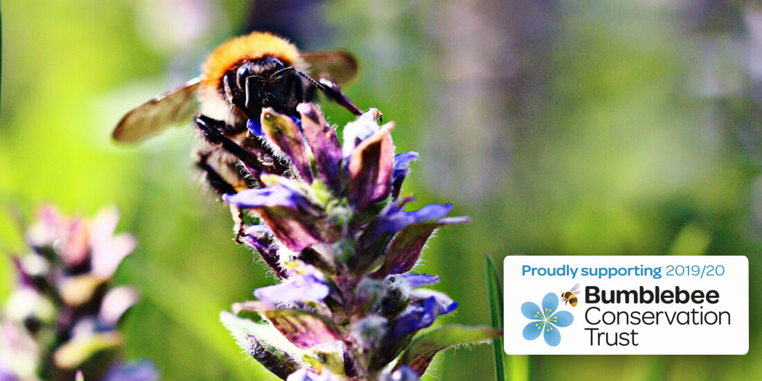 Wildflower Competition: Support the Bumblebee Conservation Trust