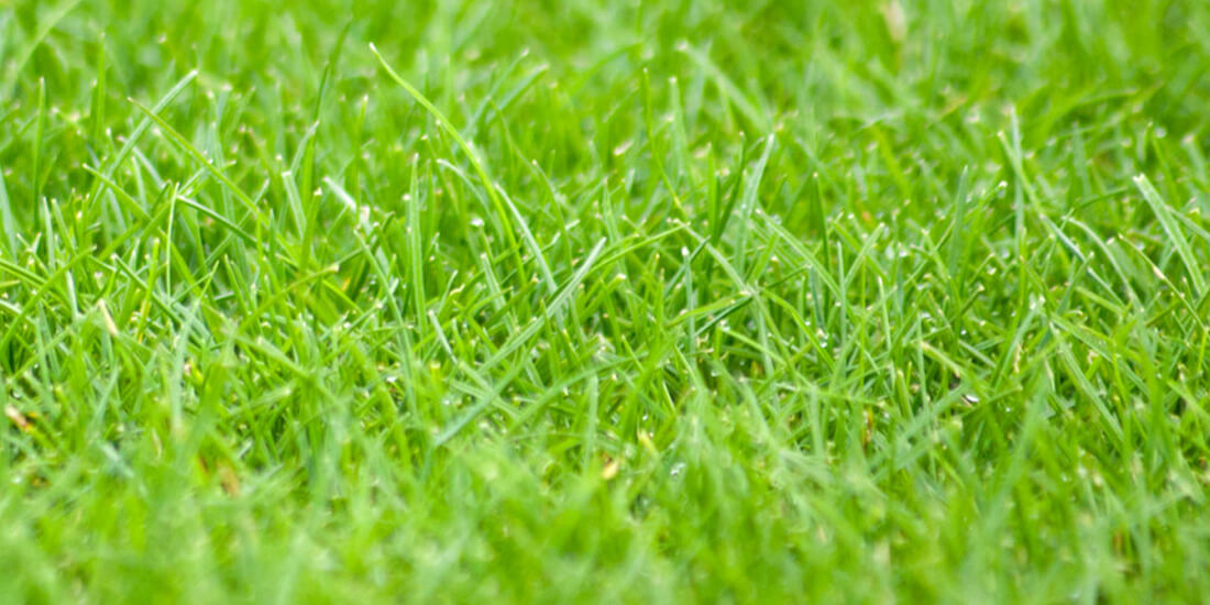 How to revive your lawn after winter