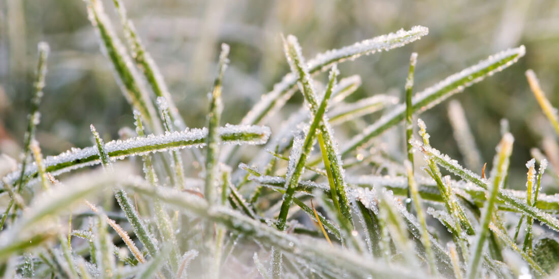 What happens to grass during winter?