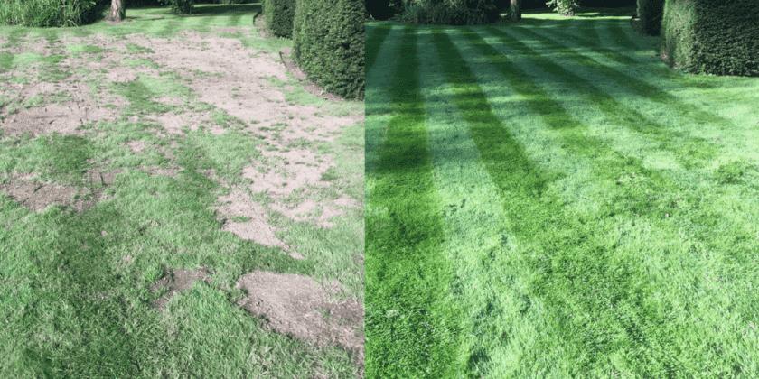 lawn transformations