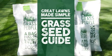Great Lawns Made Simple: Grass seed guide