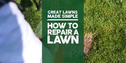 Great Lawns Made Simple: How to repair a lawn