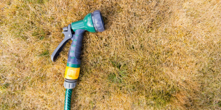 The Post Drought Lawn Repair Guide
