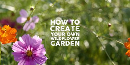 How to create your own wildflower garden