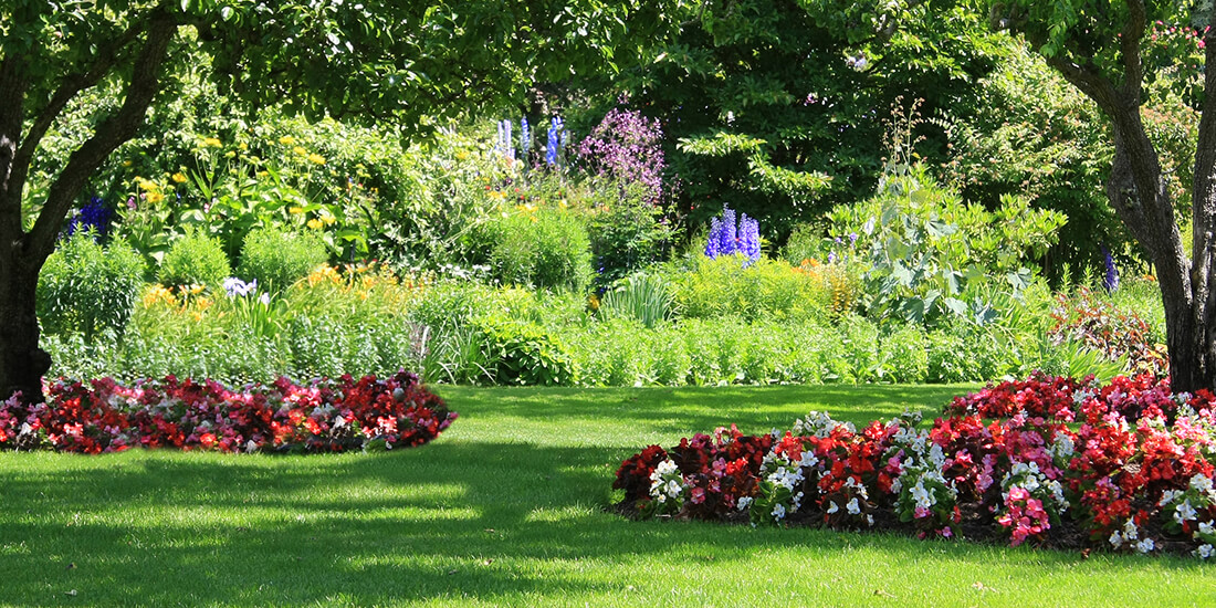 Choosing the best seed for a shaded lawn