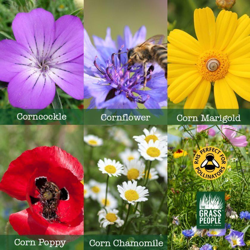 wildflower seeds UK
