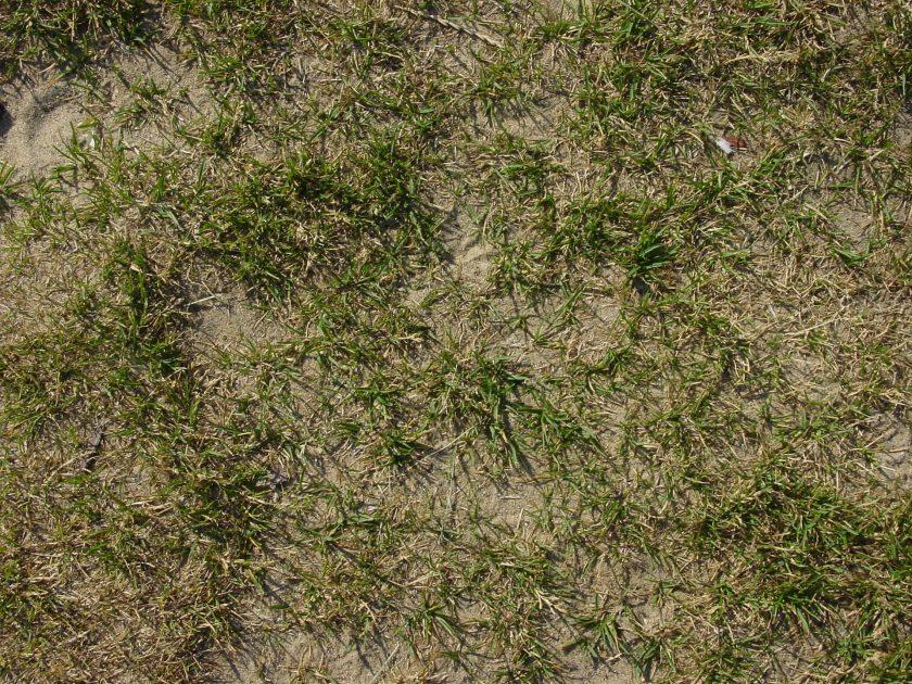 drought lawn