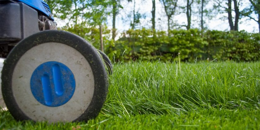 The first cut: when should I mow?