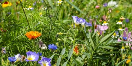 5 Reasons to grow wild this summer