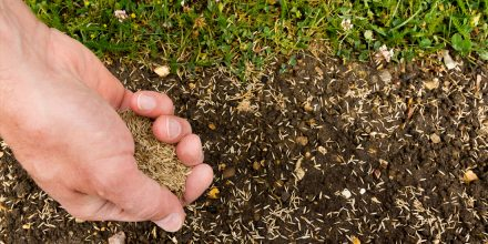 Reasons why your grass seed isn't growing this summer