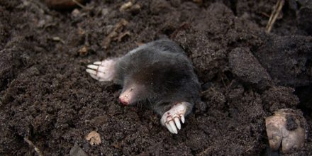 Hole-y Mole-y: How to protect your lawn from pests