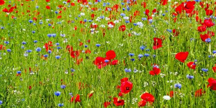 6 Great Reasons to Sow Wildflowers in Autumn