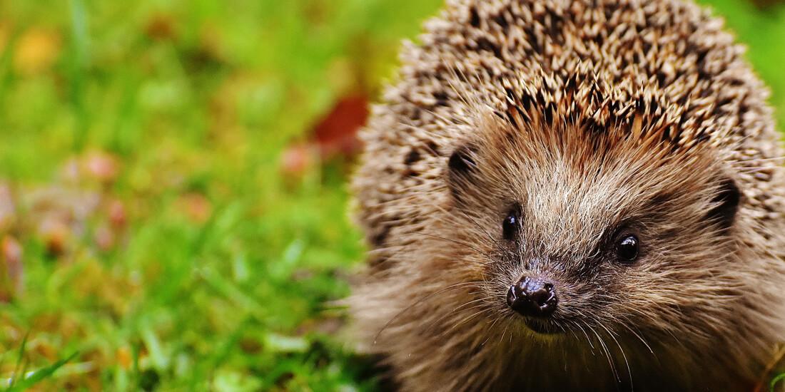 5 ways to look after wildlife in winter