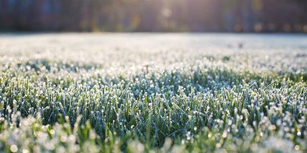 First frosts: How does frost affect your lawn?