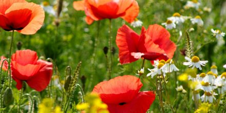 Wildflower 101: What makes a British wildflower meadow?