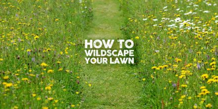 How to wildscape your lawn