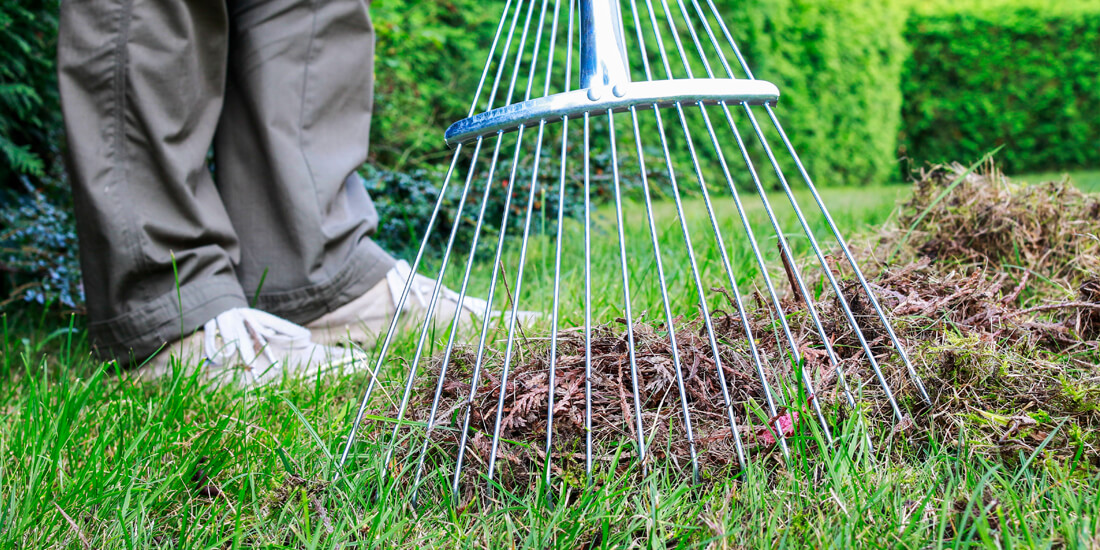 4 ways to love your lawn a little bit better!