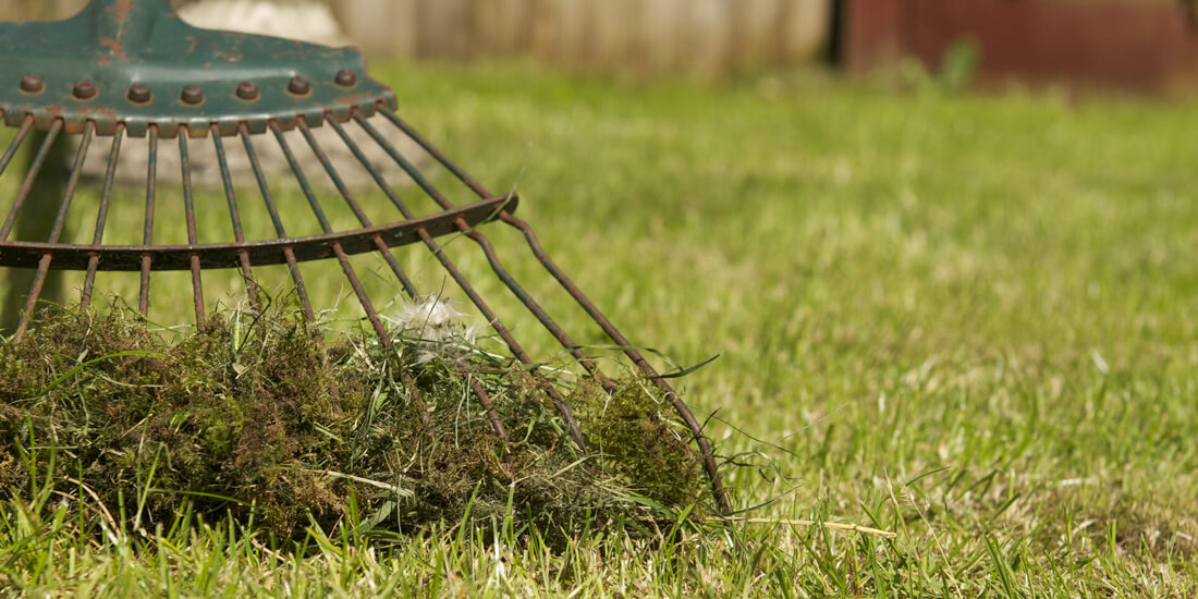 How to tackle moss in your lawn